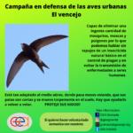 Campaña en defensa de las aves urbanas. El Vencejo Común. GEA